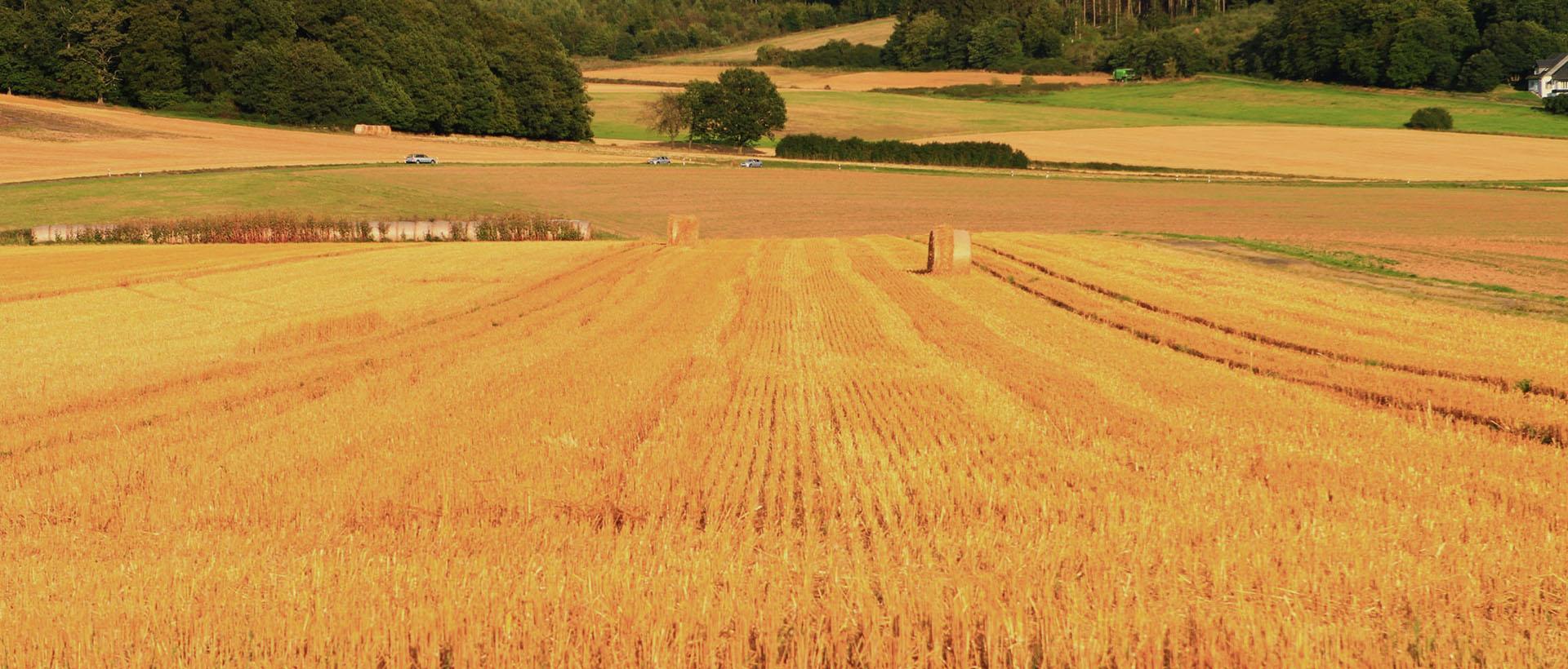 Landwirtschaft, Hofgut Dagobertshausen