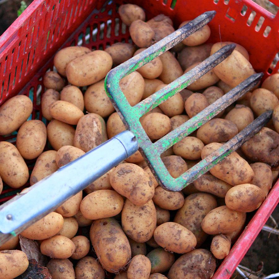 Seltene Kartoffelarten, Hofgut Dagobertshausen
