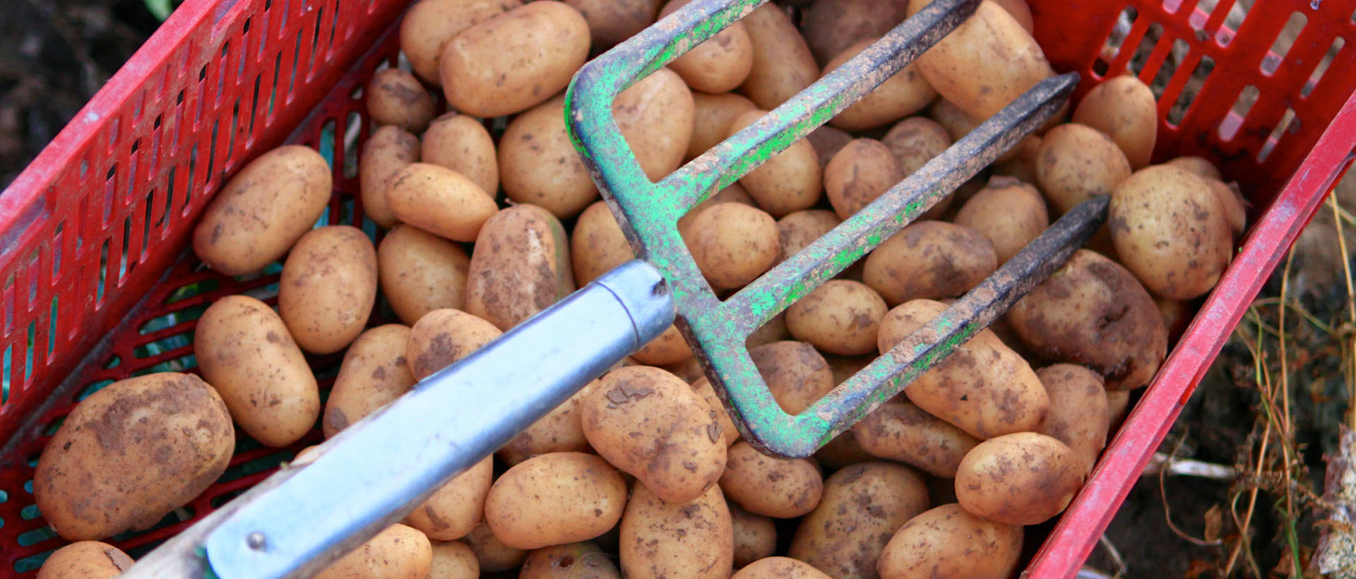 Kartoffeln, Hofgut Dagobertshausen